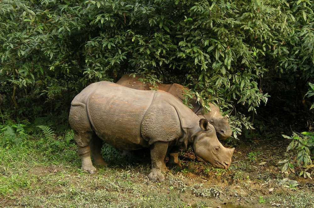 Wildlife diversity of Nepal: Home to several types flora and fauna
